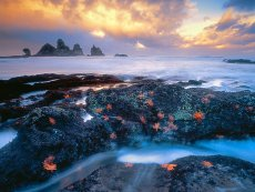 Starfish Coastline